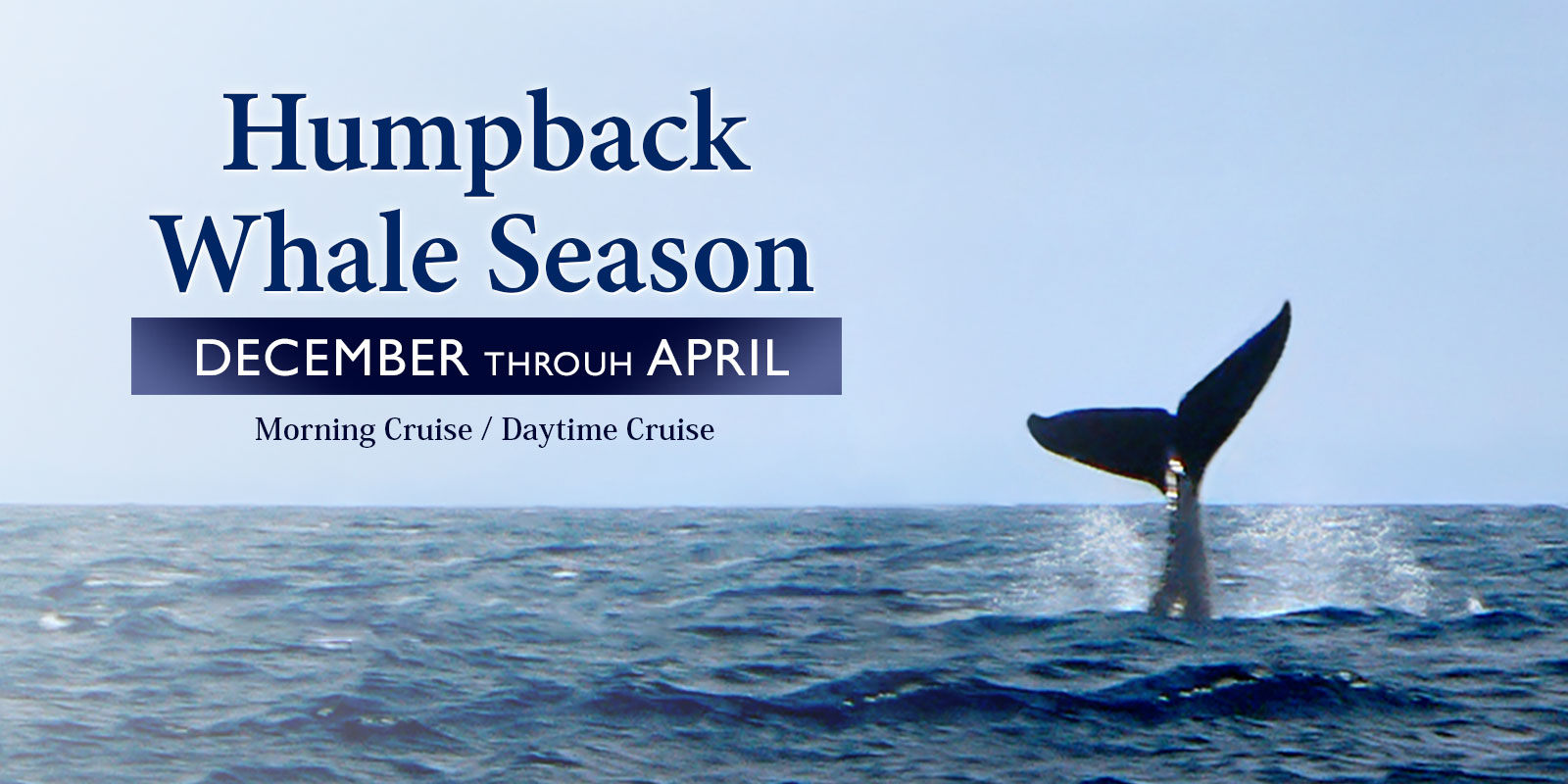 Private Charter Whale watching charter